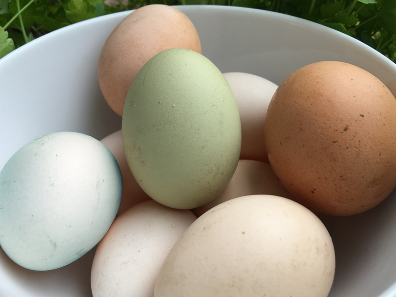 Eier Motteeier