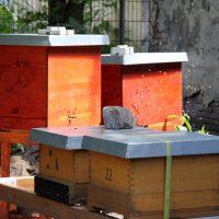 Um die Welt Honig - Holzbeuten