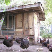 Hühnerhof vor der Renovierung