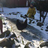 Huhn fährt Schlittschuh!
