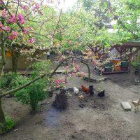 Frühling auf dem Motte Hühnerhof